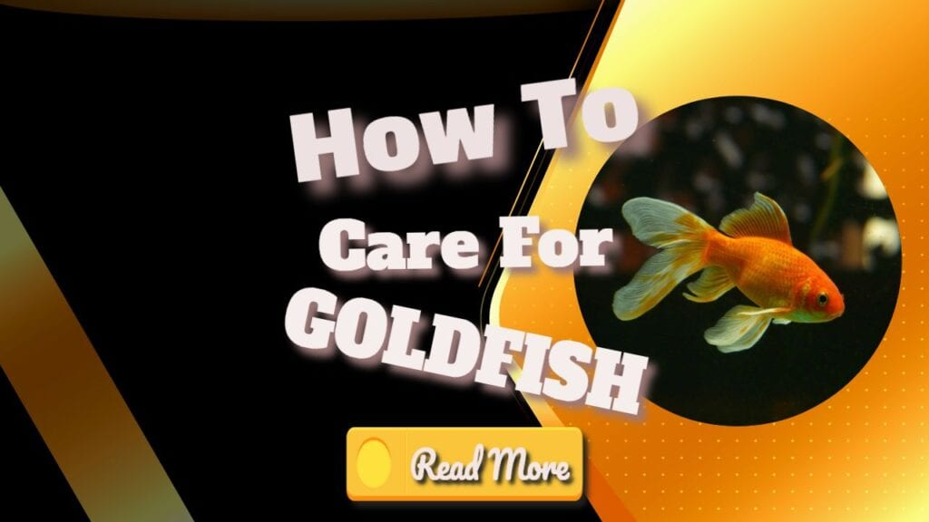 how to care for goldfish banner